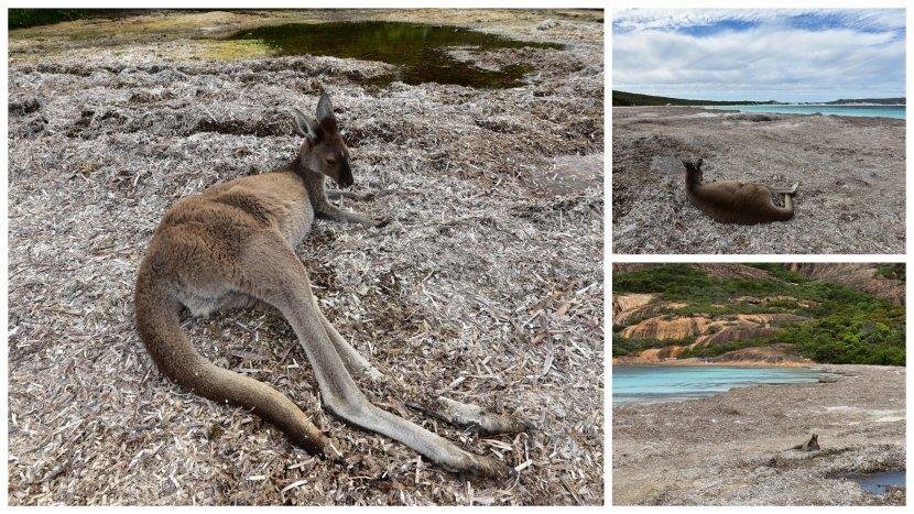 澳洲-西澳-大海角公園Cape Le Grand-Lucky Bay