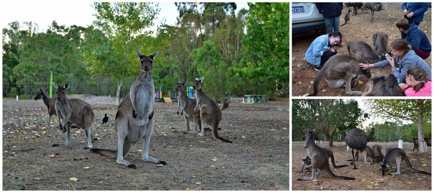 澳洲-西澳-Quinninup Eco Tourist Park
