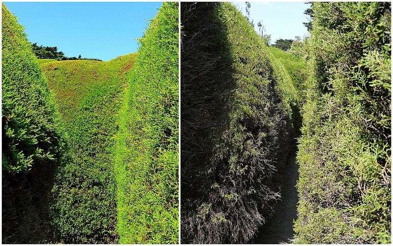 澳洲-摩寧頓半島-Ashcombe Maze & Lavender Gardens