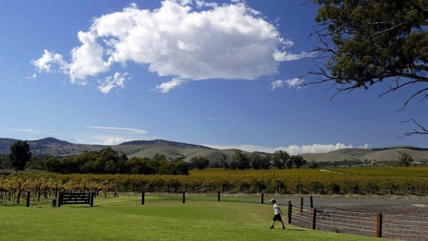澳洲-阿德雷德-巴羅莎山谷-Jacob's Creek