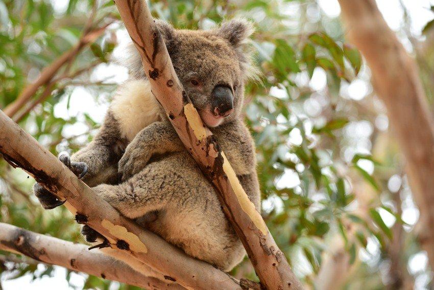 澳洲-袋鼠島-Hanson Bay Wildlife Sanctuary