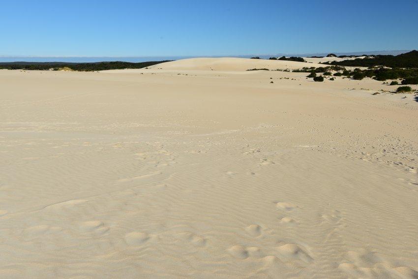 Little Sahara就是一塊大沙丘