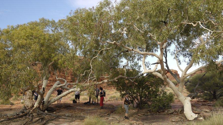 澳洲-北領地-國王峽谷