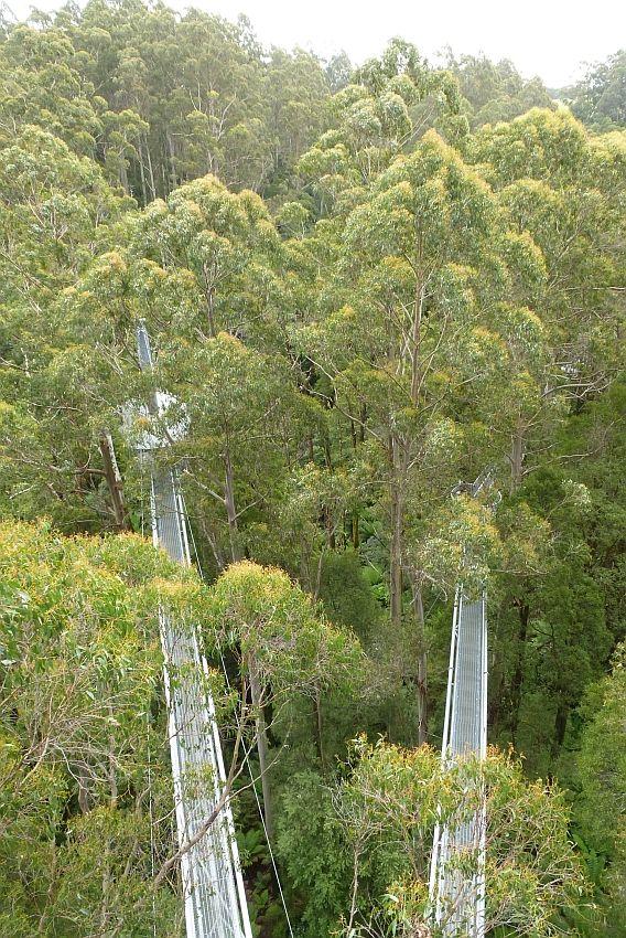 墨爾本-大洋路-Otway Fly Treetop Adventures