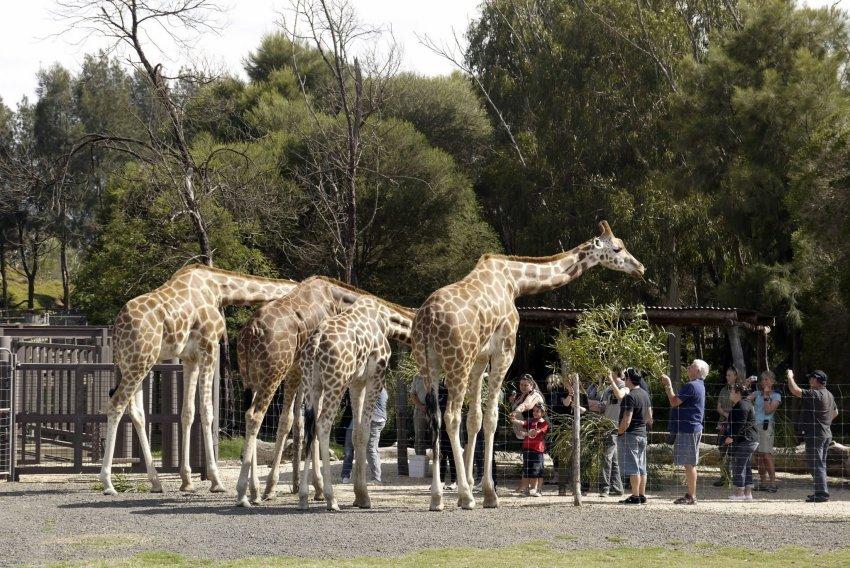 澳洲-墨爾本景點-威勒比開放動物園