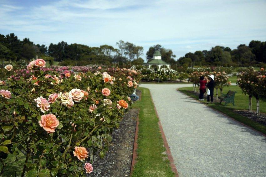 澳洲-威勒比公園-維多利亞州立玫瑰公園