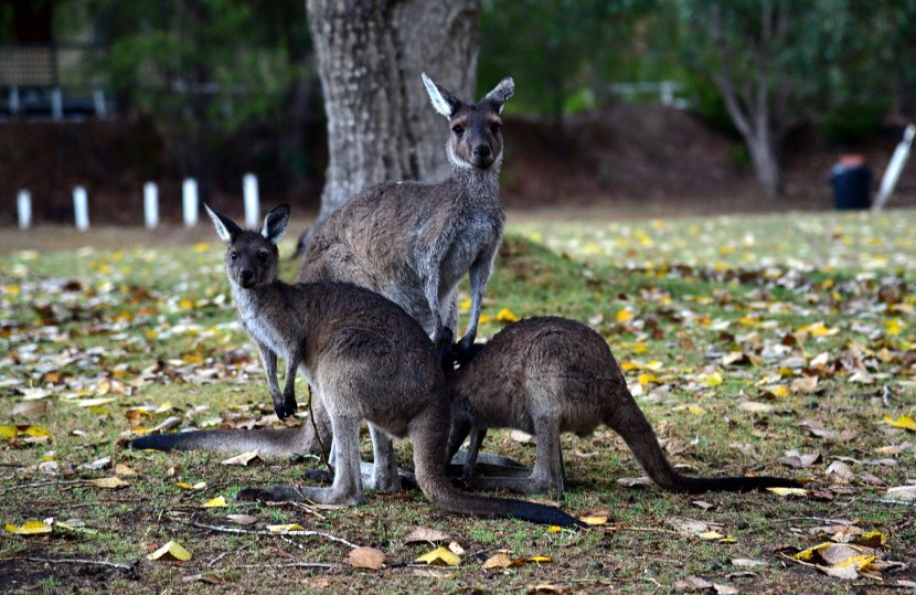 澳洲-quinninup-eco-tourist-park