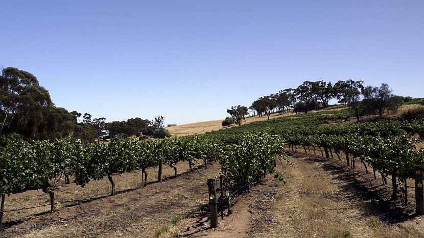 澳洲-克萊爾谷地-Sevenhill Cellars