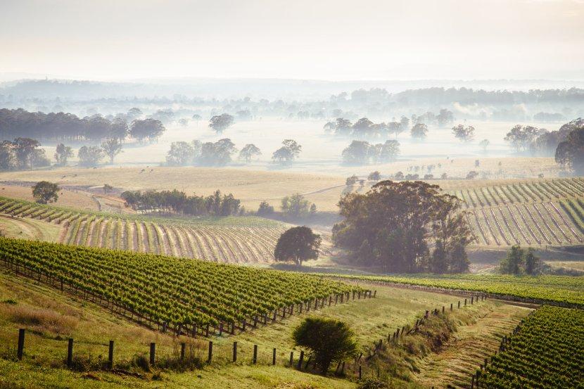 澳洲-新南威爾斯-獵人谷