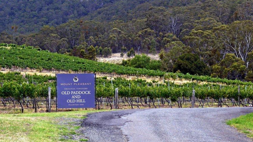澳洲-雪梨-獵人谷-Mount Pleasant - Old Paddock vineyard
