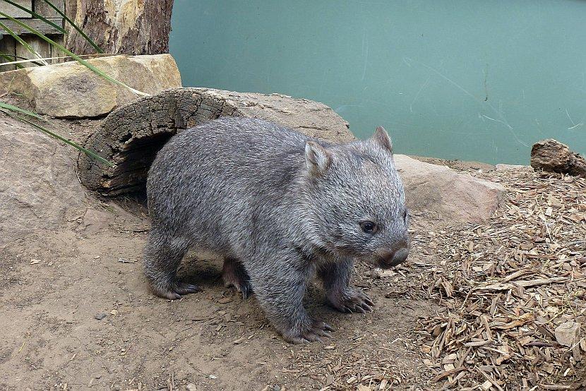 澳洲-塔斯馬尼亞-波諾朗野生動物保護基地