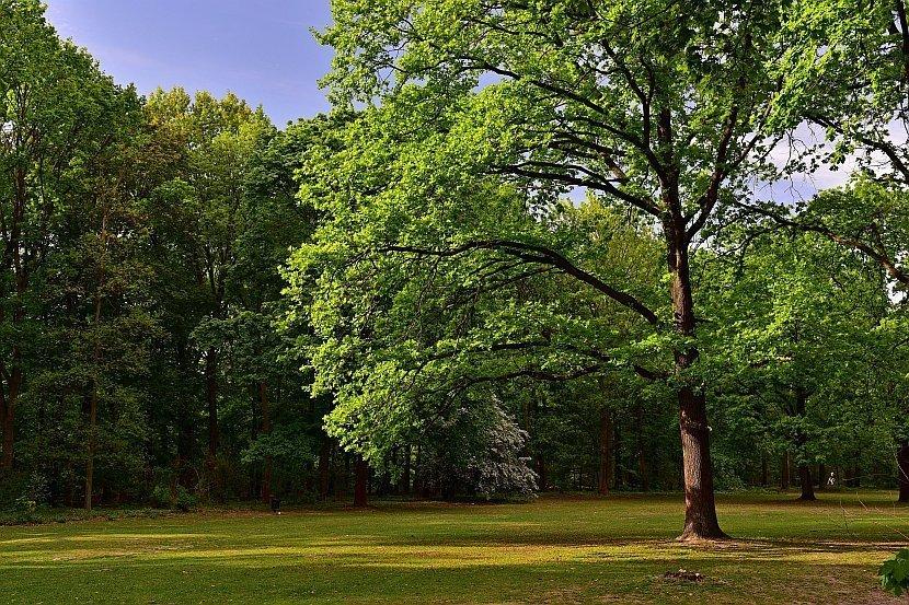 德國-柏林-蒂爾加藤公園(Großer Tiergarten)