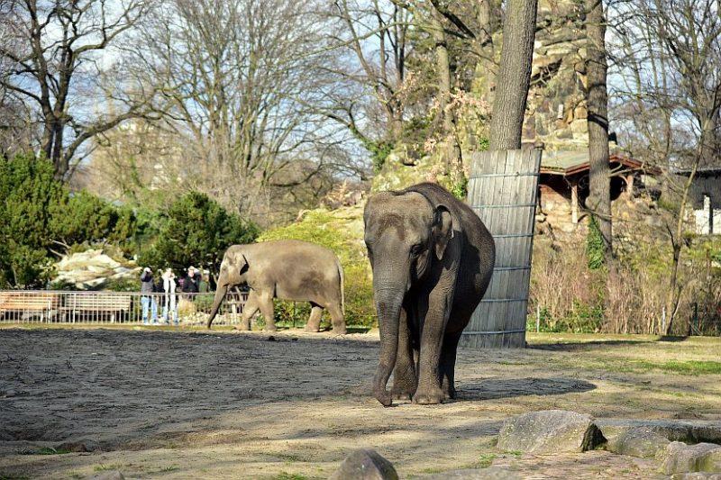 德國-柏林-柏林動物園