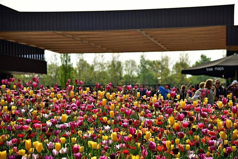 荷蘭-庫肯霍夫公園-入口