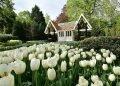 荷蘭-庫肯霍夫花園-鬱金香