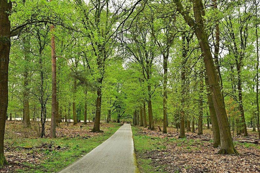 荷蘭-高費呂韋國家公園/梵谷森林